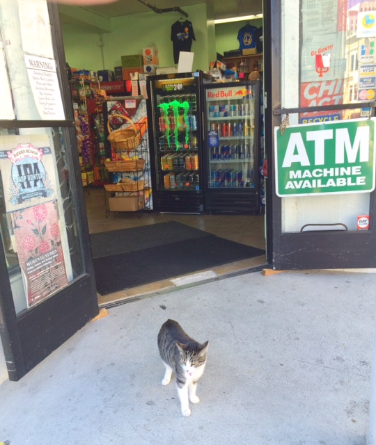 Cat a local bodega