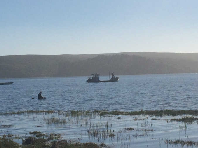 Out gathering oysters.